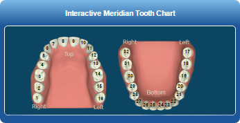 Holistic Dentist Mayfield Village - Tooth Chart